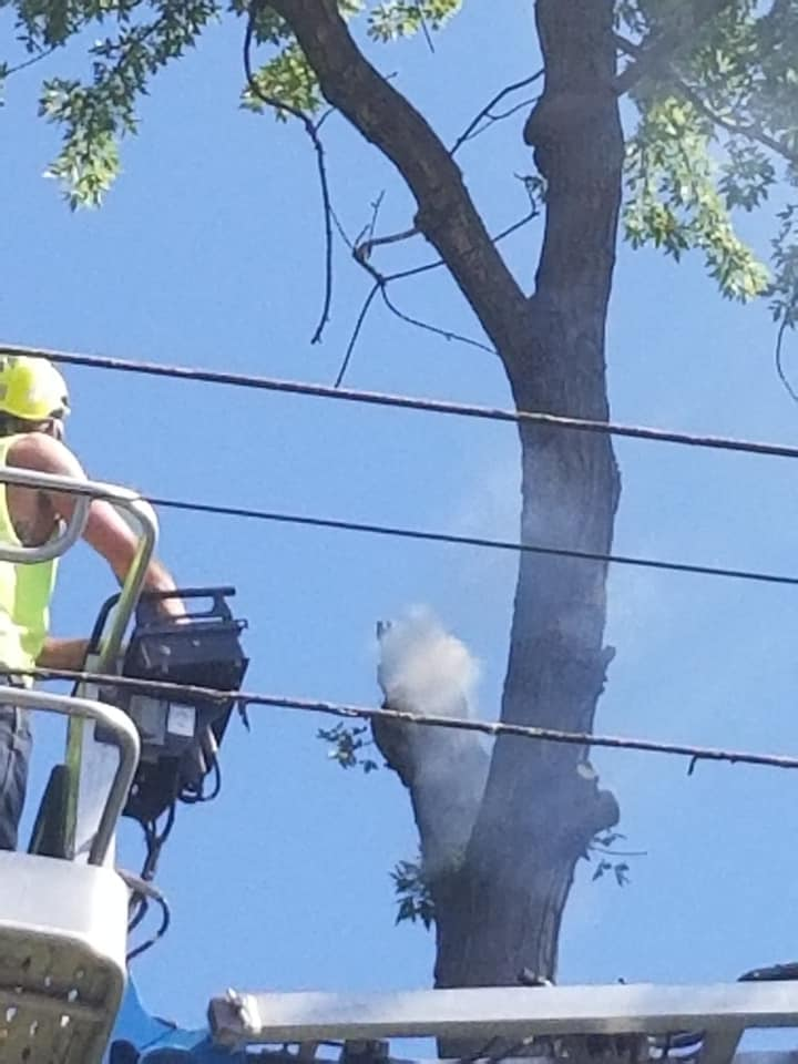 Tree Trimming Oakland CA