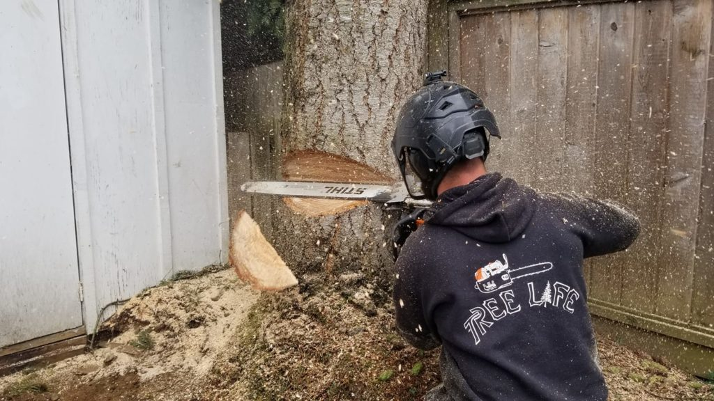 okaland tree service