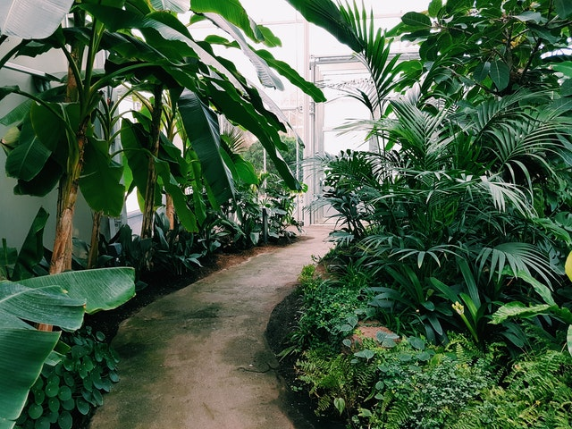Plants and passages